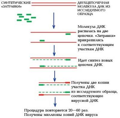 ЦЦР анализ